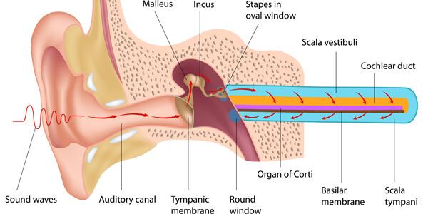 The Ear and Tinnitus